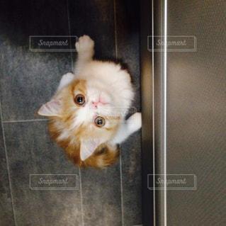 猫の写真・画像素材[270944]