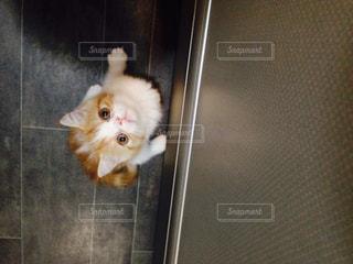猫の写真・画像素材[271781]