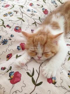 猫の写真・画像素材[276159]