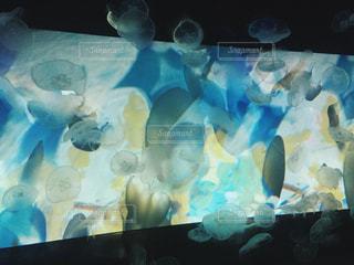 水族館の写真・画像素材[271037]