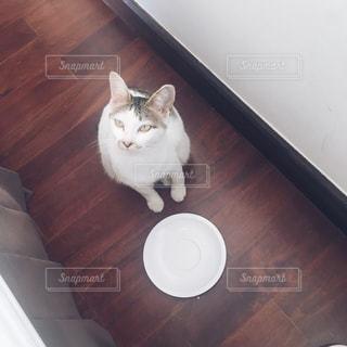 猫 - No.365291