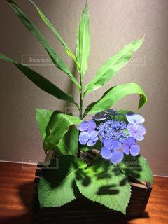 花の写真・画像素材[271182]