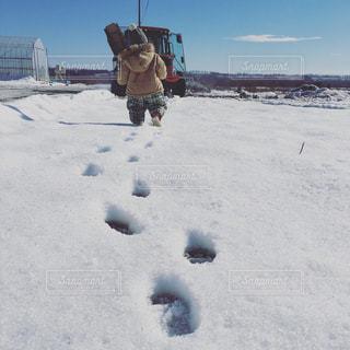 雪の写真・画像素材[277689]
