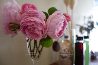 花の写真・画像素材[271307]