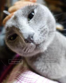 近くに猫のアップの写真・画像素材[873220]