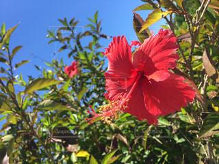 花の写真・画像素材[272107]
