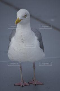 No.274205 鳥