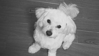 犬の写真・画像素材[286122]