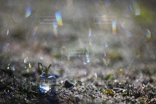 自然の写真・画像素材[4711]