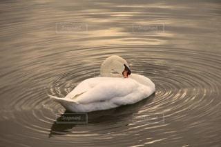 自然の写真・画像素材[4679]