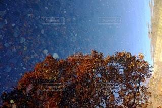 自然の写真・画像素材[4661]