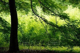 自然の写真・画像素材[4626]