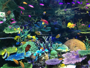 魚の写真・画像素材[271774]