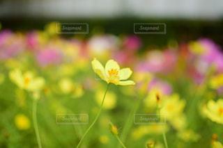 花の写真・画像素材[271950]