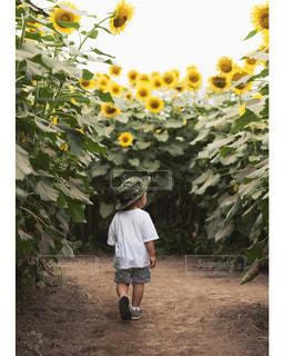 子どもの写真・画像素材[272248]