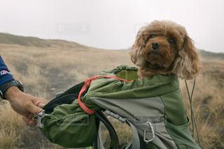 犬 - No.276508