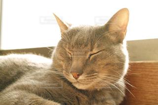 猫の写真・画像素材[276553]