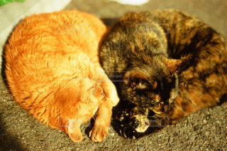猫の写真・画像素材[324426]