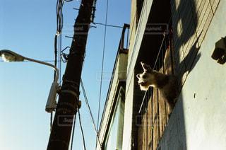 犬の写真・画像素材[324535]