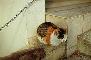 猫の写真・画像素材[324536]