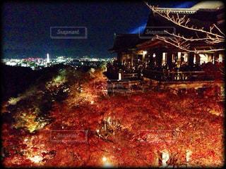 清水寺のライトアップ - No.273472