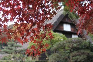 日本の紅葉 - No.275397