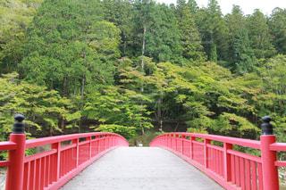 赤い橋の写真・画像素材[275915]