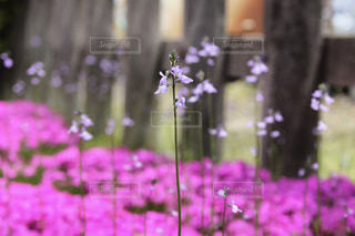 幸せの花の写真・画像素材[986503]