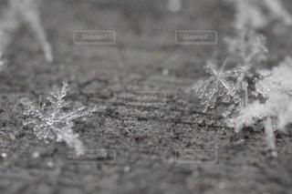 SNOW CRYSTAL❄️の写真・画像素材[989606]
