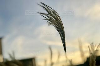 近くの植物のアップの写真・画像素材[1627637]
