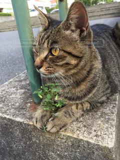 猫の写真・画像素材[272569]