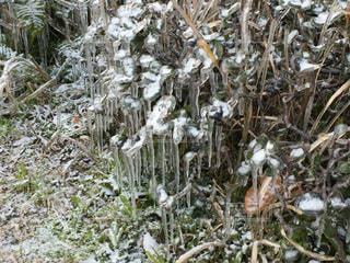 冬の写真・画像素材[272849]