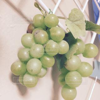 果物の写真・画像素材[273259]