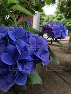 近くの植物に紫の花のアップの写真・画像素材[1671456]