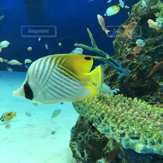 水面下を泳ぐ魚たちの写真・画像素材[1784489]