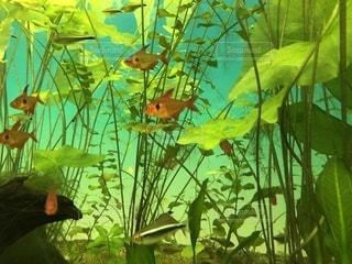水の中をの写真・画像素材[1784505]