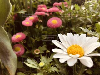 花の写真・画像素材[2043260]