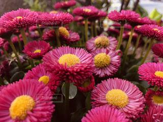 花の写真・画像素材[2043263]
