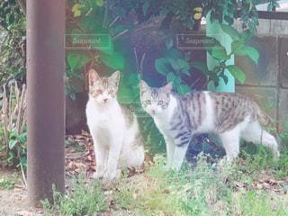 猫の写真・画像素材[2044793]