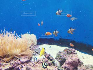 魚の写真・画像素材[273630]