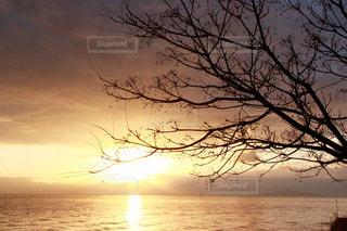 自然の写真・画像素材[272992]