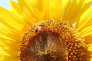 花の写真・画像素材[275188]
