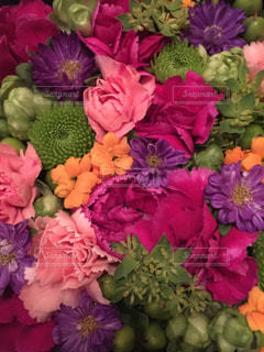 花の写真・画像素材[273290]