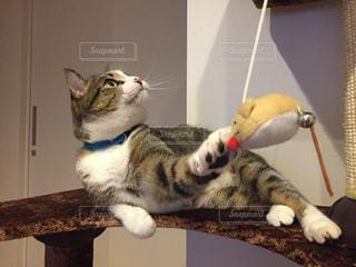 猫の写真・画像素材[273423]