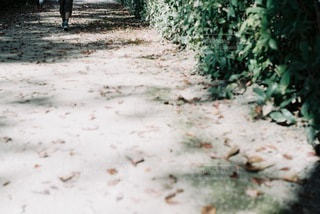 自然の写真・画像素材[4619]