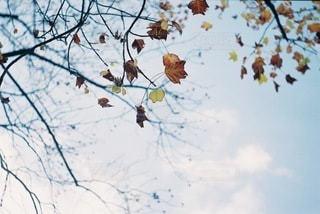 自然の写真・画像素材[4611]