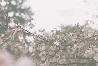 自然の写真・画像素材[4605]