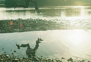 自然の写真・画像素材[4598]