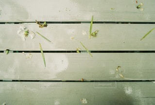 自然の写真・画像素材[4597]