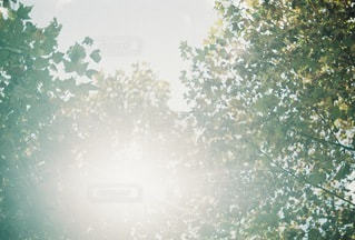 自然の写真・画像素材[4592]